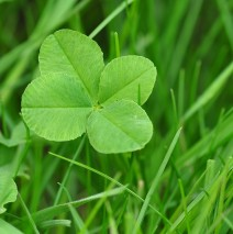 Law of Attraction:  Seeing Shamrocks