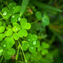 St. Patrick's Day Keywords:  SEO, Shamrocks, and Success